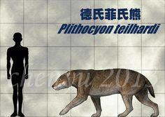 德氏菲氏熊(Plithocyon teilhardi)