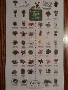Pet Friendly Plants                                                                                                                                                      More