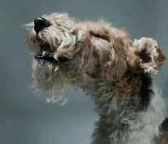 Personified Pooch Portraits - Gerrard Charles Gethings Captures Pets' Inividuality in Photos (GALLERY)