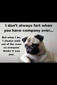 May 2018 - Funny Pug Dog Memes LOL. See more ideas about Dog memes, Pugs and Pug love. Funny Pug Videos, Funny Pug Pictures, Funny Animal Memes, Dog Memes, Cute Funny Animals, Funny Dogs, Pug Pics, Funny Memes, Animal Jokes