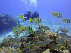Scuba diving somewhere tropical