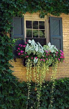 Mindig irigykedve néztem a szomszédok gyönyörű virágait, amíg a szomszédasszonyom el nem mondta, mi a titka - Bidista.com - A TippLista!