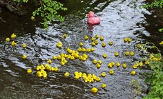 Wymondham Abbey Duck Race on the River Tiffey takes place on Easter Monday, April 17. The races start at 11am, with ducks from just £1. The event will be held at Becketswell, at the bottom of the road below the Abby and entry is free.