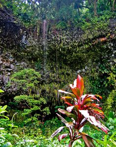 Cruise up Hawaii's Wailua River to the Fern Grotto, Kauai Hawaii Usa, Kauai Hawaii, Hawaii Travel, Wonderful Places, Beautiful Places, Fern Grotto, Tropical Paradise, Tropical Garden, Napali Coast