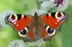 Three Steps To Save Britain's Butterflies   IFLScience