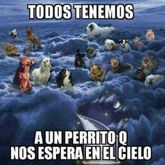 Yo tengo tres perrito que me esperan en el cielo
