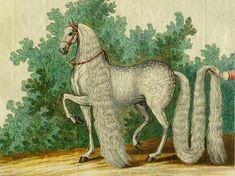 Beautiful Kranich: Count Anton Günther's Favorite Oldenburg Crackle Painting, Fantasy Portraits, Mane N Tail, Oldenburg, Horse Saddles, Dressage, Anton, Counting, Horses