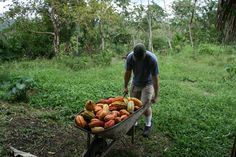 Sourcing a wheelbarrow of cacao pods that will be transformed into chocolate. Spice Rub, Few Ingredients, How To Make Chocolate, Wheelbarrow, Cocoa Butter, Body Care, Yummy Treats, Harvest, The Balm