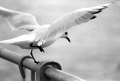 Mouette Animals, Photography, Animales, Animaux, Animal, Animais