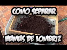 Como Separar El Humus De Lombriz || Abono Organico || La Huertina De Toni - YouTube