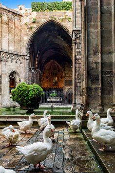 """I simpatici """"abitanti"""" del chiostro della cattedrale! The funny """"dwellers"""" of the cathedral cloister! - Foto: Alessandro Grussu"""