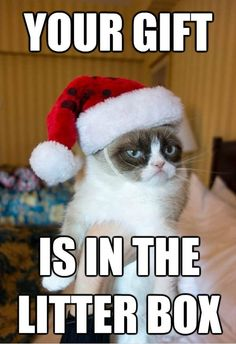 grumpy cat quotes | Grumpy cat - Your gift is in the litter box - Funny Pictures, Images ...