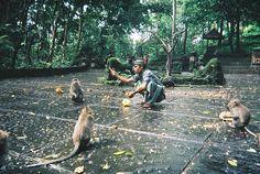 Tips if visiting Monkey Forest Ubud, Bali Indonesia