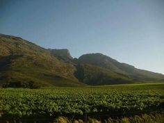 Cape Town vineyards
