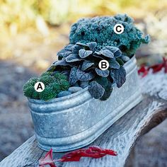 Beat Frost        Frost doesn't have to mean the end of your container plantings! Tough plants stand up to the cold and stay looking great.        A. Hens-and-chicks (Sempervivum tectorum) -- 1        B. Ajuga 'Mahogany' -- 1        C. Flowering kale (Brassica 'Kamome Red') --
