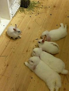 Everything you need to know about bunnies. Bunny kisses, bunny rabbit, bunny ears, bunny nose, bunny butt, bunny and people, bunny and kids, two bunnies, bunny love