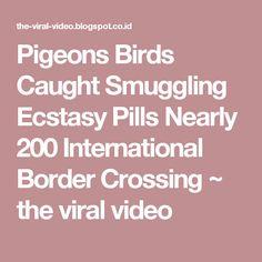 Pigeons Birds Caught Smuggling Ecstasy Pills Nearly 200 International Border Crossing ~ the viral video