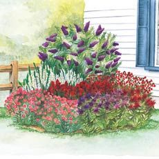 Butterfly-Hummingbird Garden. $49.99 - $20.00 gift coupon - $5.00 with web order. 9 plants total from Audubon Workshop.