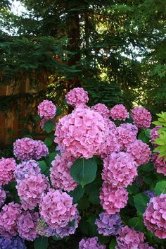 love hydrangeas...almost as much as mason jars.