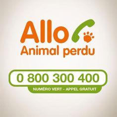 ALLO ANIMAL PERDU / 0 800 300 400 - LE NUMERO VERT DE LA SPA POUR CONSEILLER EN CAS DE PERTE D'UN ANIMAL