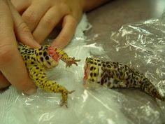 Full Documentary - National Geographic Worlds - Deadliest Animals Desert...