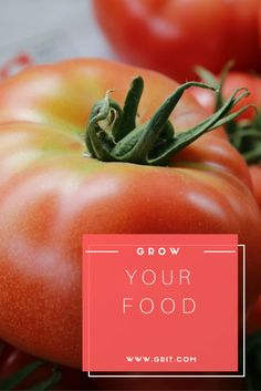 Give a person a tomato, they'll eat for a day. Inspire and teach them how to grow a garden, they'll eat for a lifetime.