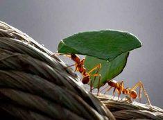 Image Title Image Title, Health Care, Plant Leaves, Plants, Plant, Planets, Health