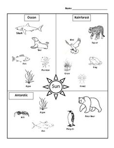 This is a simple food chain assessment. Which Includes three different examples with organisms from rainforest, ocean and Arctic ecosystems. Third Grade Science, Elementary Science, Science Classroom, Teaching Science, Science For Kids, Science Activities, Science Ideas, Science Lessons, Life Science