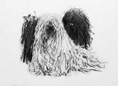 Pulis, puli, pulik, corded hair dogs, Endre Penovac