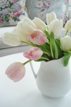 Elegant pink & soft white tulips.