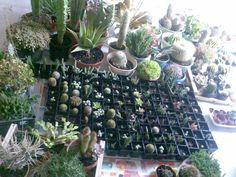 proteggere piante grasse