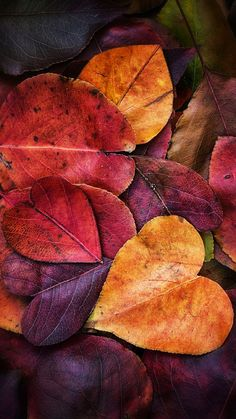 Yellow leaves, heart shaped leaves,Wallpaper,iPhone Wallpaper
