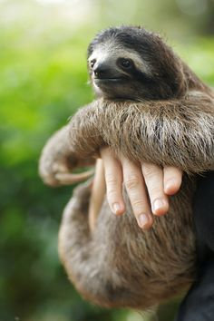 hanging out with sloth