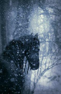 Beautiful Black Friesian in Winter. All The Pretty Horses, Beautiful Horses, Animals Beautiful, Cute Animals, Black Horses, Wild Horses, Arte Equina, Majestic Horse, Friesian Horse