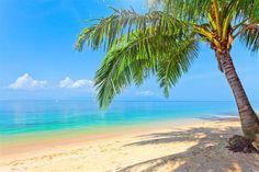 Palm tree beach wall decals, tropical beach wall decal mural vinyl sea print, coast wall sticker for children nursery decoration idea [175] by 3DWindowWallStickers on Etsy https://www.etsy.com/listing/220150123/palm-tree-beach-wall-decals-tropical
