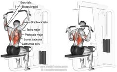 Behind the neck lat pulldown. This exercise is NOT recommended! See website. Targets your Latissimus Dorsi.Synergistic muscles are Brachialis, Brachioradialis, Biceps Brachii, Teres Major, Teres Minor, Pectoralis Major, Rhomboids, Lower Trapezius, and Levator Scapulae. Also known as rear pulldown or rear lat pull down.