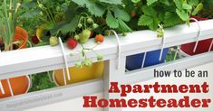 how to homestead in an apartment-- 10 tips for those of use who don't have land.