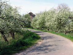 De Betuwe in bloei. Gelderland, Netherlands