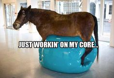 7be259c9 funny horse is tonning his core with an exercise ball The Funny, Funny Cute,