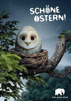 Zoo Cologne: Owl    Advertising Agency: Preuss und Preuss, Berlin, Germany  Creative Director: Michael Preuss  Art Directors: Zuzana Havelcova, Vera Brych  Copywriter: Nicolas Blättry  Consultant: Lucille Lincoln-Codjoe  Published: March 2013