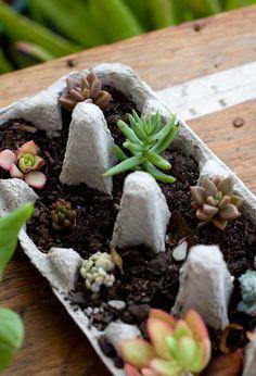 Vaso para planta com caixa de ovo