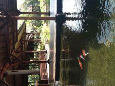Ponds at the Padma resort