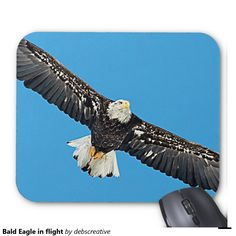 Bald Eagle in flight Mouse Pad