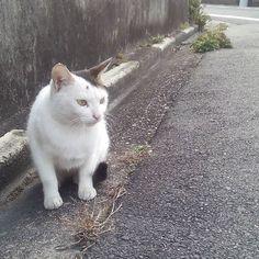 気になる  なかなかの美人さんなのです 気になるのはやはり鳩さん  #猫#cat#ねこ#気になる#のらちゃん