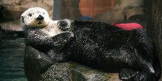 Draw me like one of your French sea otters - August 7, 2015