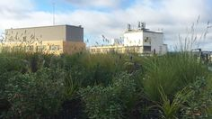 Fytogreen was commissioned to install 5,352m2 of extensive roof gardens at the New Bendigo Hospital... read more at   http://fytogreen.com.au/new-bendigo-hospital-extensive-roof-garden/