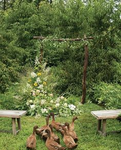 Summer Wedding Flower Ideas You've Never Seen Before   Martha Stewart Weddings - For a rustic ceremony arch that looks as if it sprouted up on its own, Love starts with a simple wooden frame and adds armfuls of grasses, ferns, heuchera, lamb's ear, dahlias, lisianthus, rudbeckia, hydrangeas, clematis, and tomato vines. Building a naturally asymmetrical look, she places potted greenery along the ground to serve as a foundation, then secures other flowers and foliage to the arch.