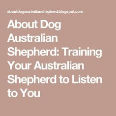 About Dog Australian Shepherd: Training Your Australian Shepherd to Listen to You