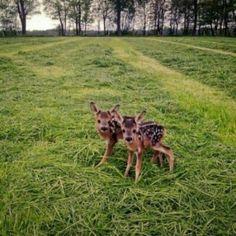 Bambi Twins~How Precious! Cute Creatures, Beautiful Creatures, Animals Beautiful, Cute Baby Animals, Animals And Pets, Funny Animals, Animal Pictures, Cute Pictures, Mundo Animal