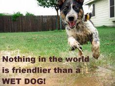 friendly wet dog